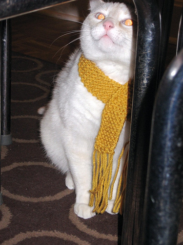 Kitteh in Mustard Scarf